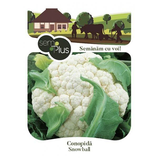 Seminte de conopida Snowball, 1 gram, SemPlus