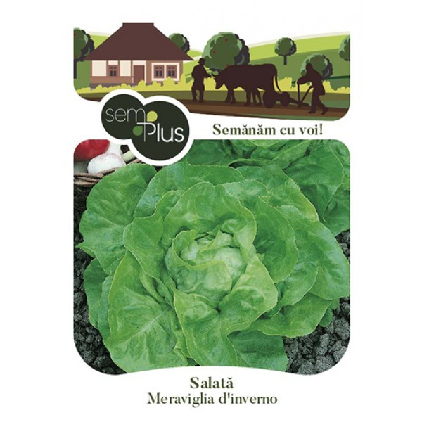 Seminte de salata Meraviglia d Inverno, 3 grame, SemPlus